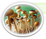 Click here for more information on Mazatapec Spores