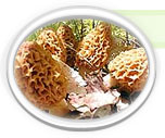 Click here for more information on White Morel Spores